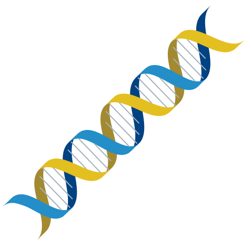 DNA Graphical Abstract Design